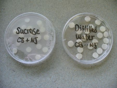 Osmosis in Potato Cells Experiment http://vcebiology.edublogs.org/category/cell-biology/page/3/
