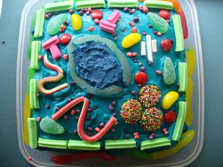 3D Plant Cell model Cake http://vcebiology.edublogs.org/2009/02/12/our-edible-cell-models/