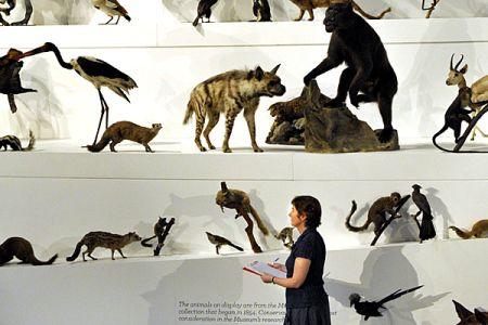 Melbourne Museum - Wild Exhibit