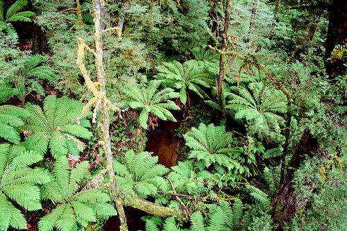 Otway forest