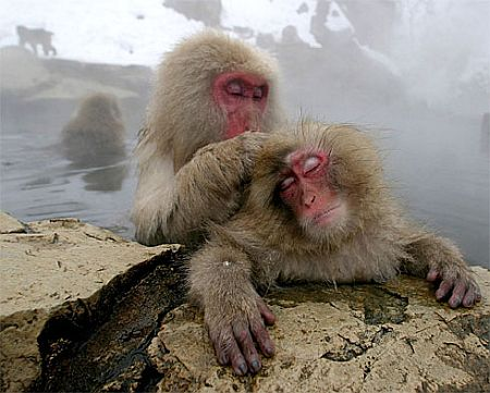 monkeys_grooming