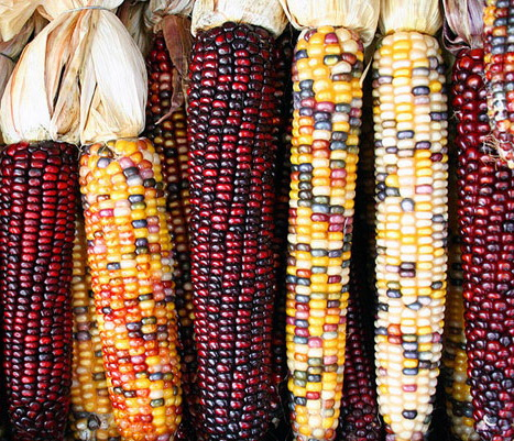 colored-corn