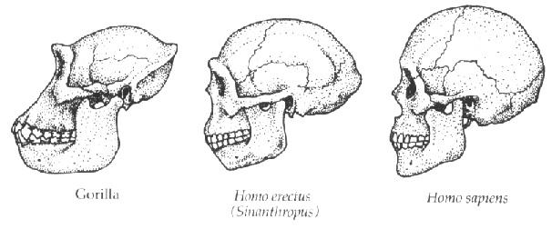 three_skulls