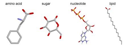 biological_molecules copy