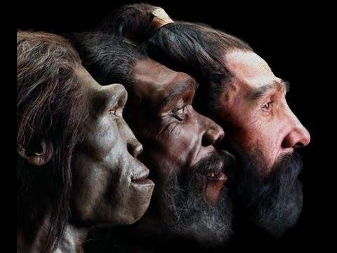 human_evolution